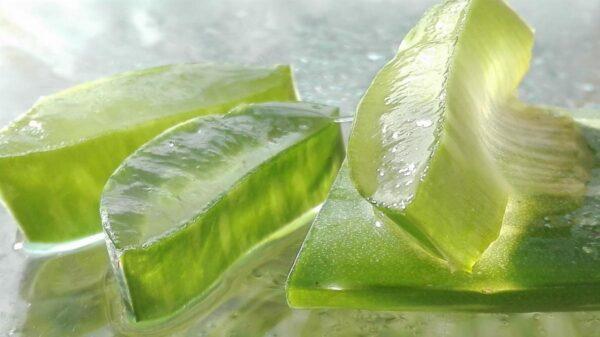 Dimagrire con i prodotti naturali: l'effiacia dell'Aloe Vera