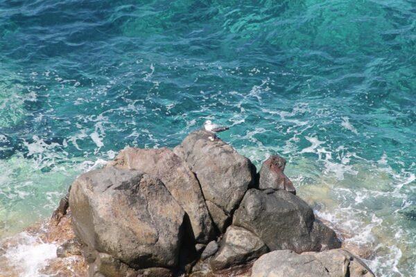 Isola di Capraia: lontano dalle solite mete turistiche
